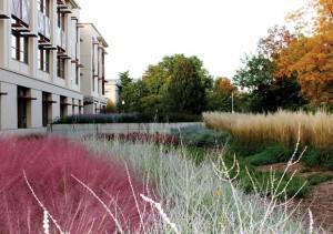 American University Green Roof