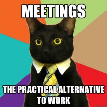 Meetings Cat