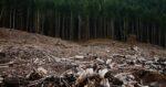 Illegal Logging Focus Of LEED Pilot Credit