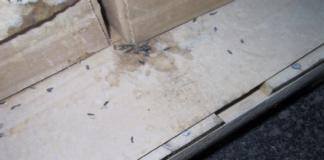 pest activity